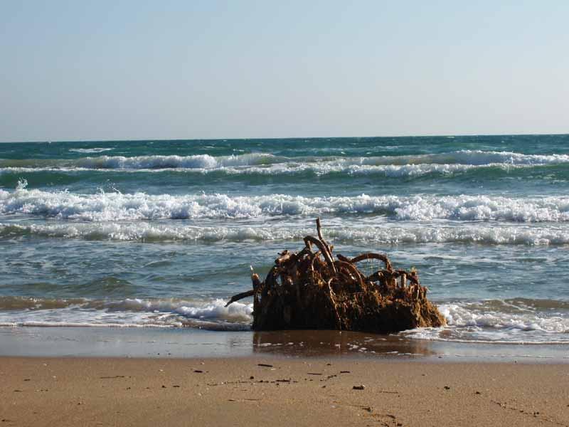 С тетей на пляже 19 фотография